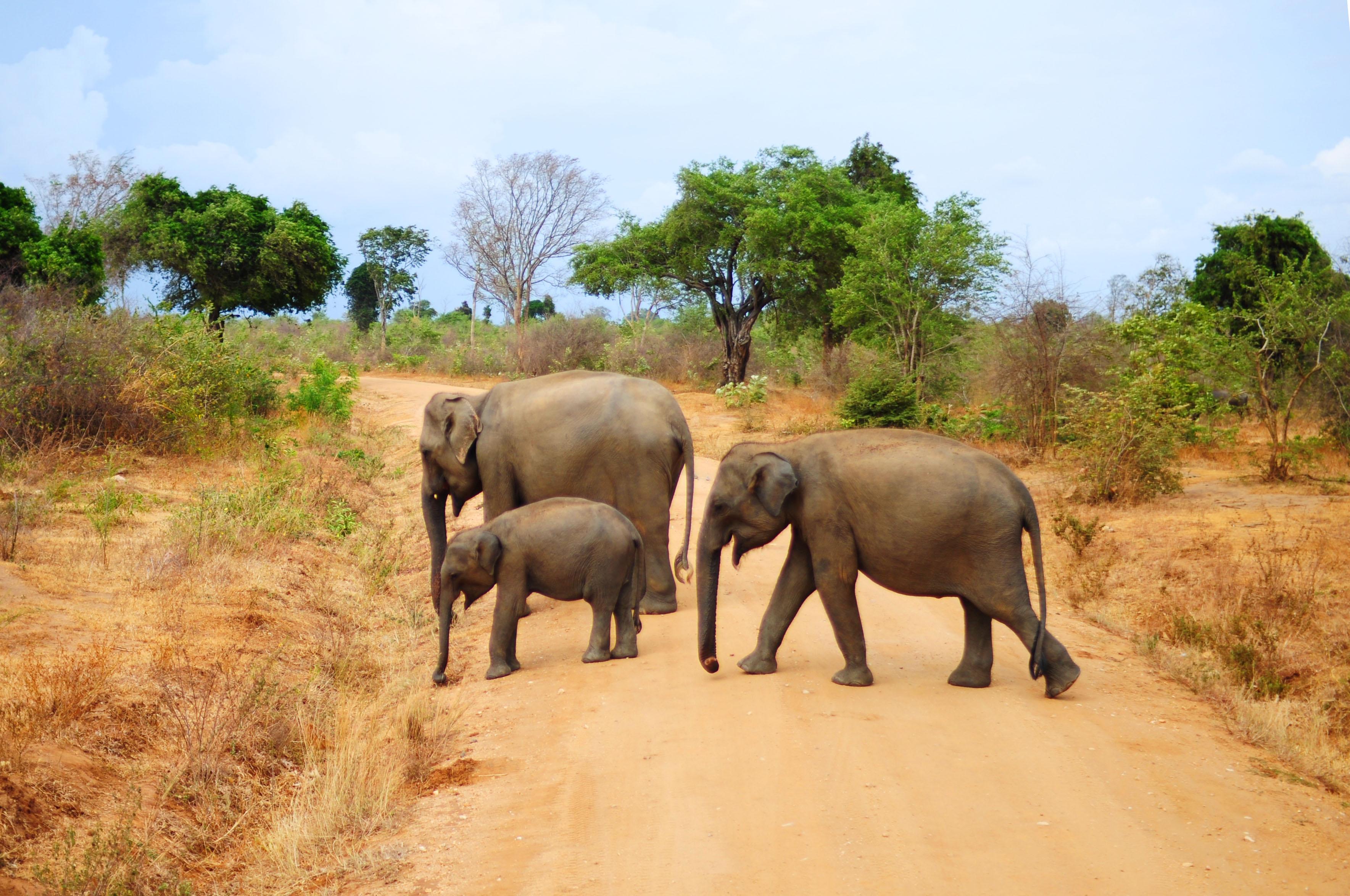Voyage en Asie - Sri Lanka