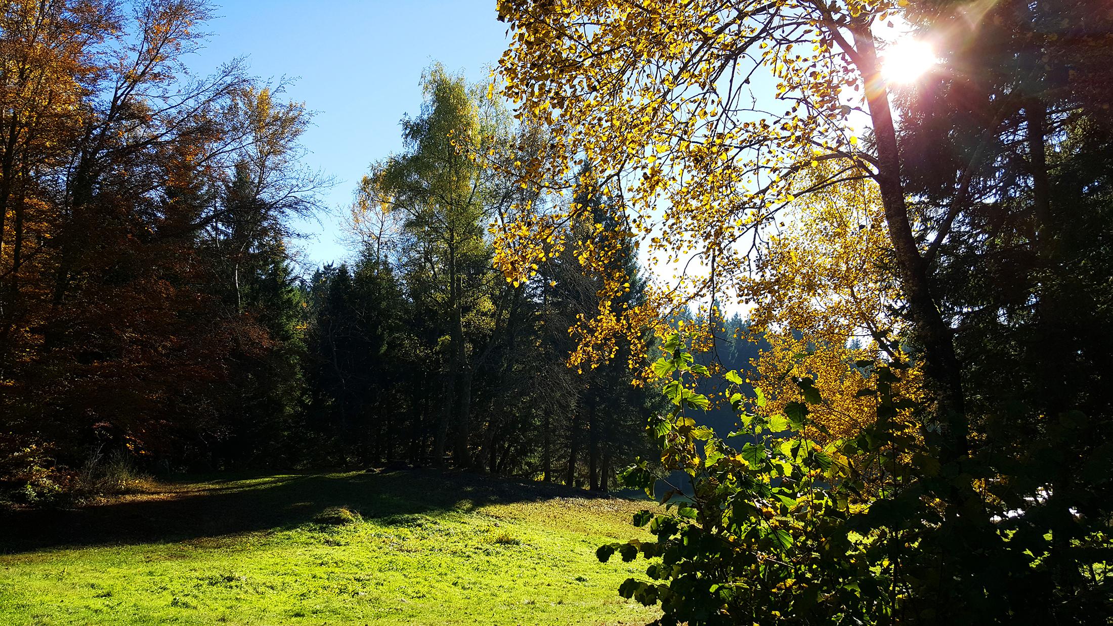 forêt lac de freydières revel