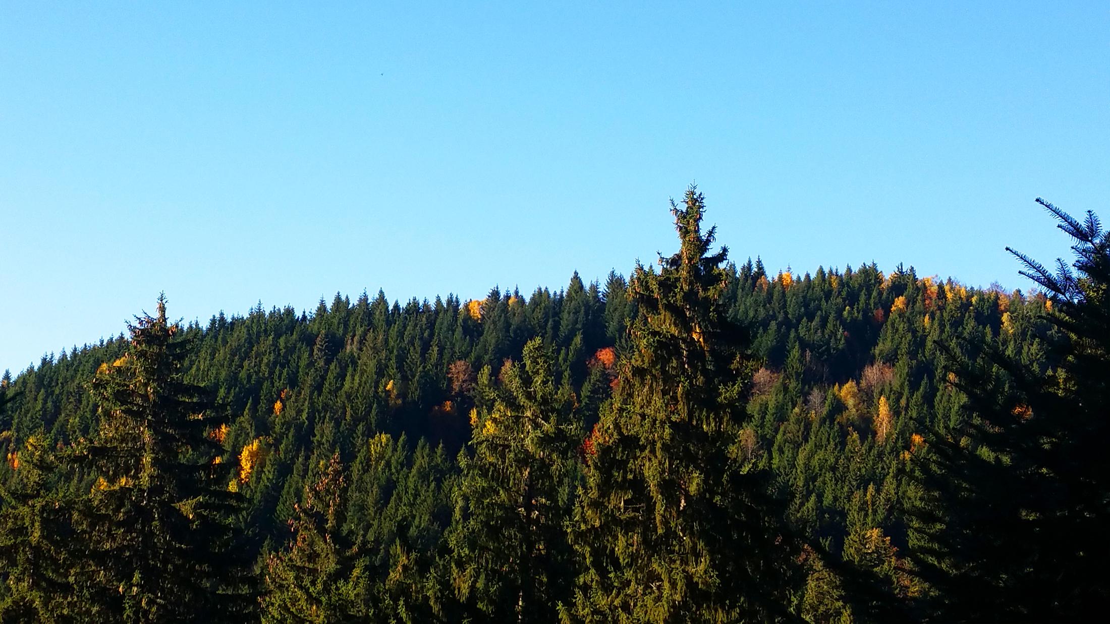 forêt grenoble