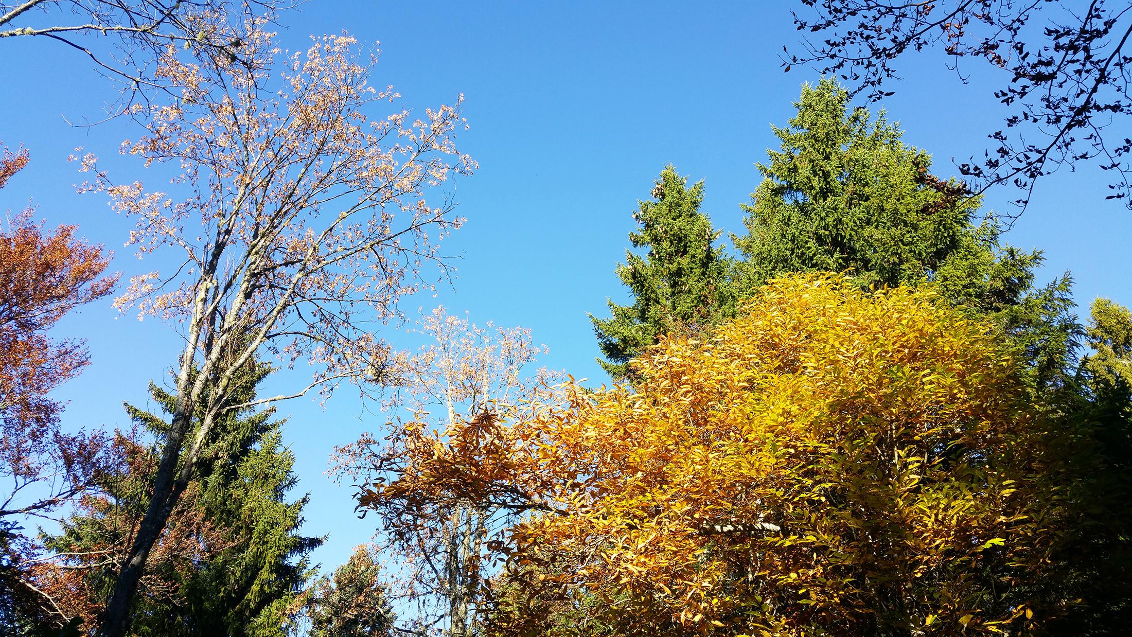 balade forêt grenoble