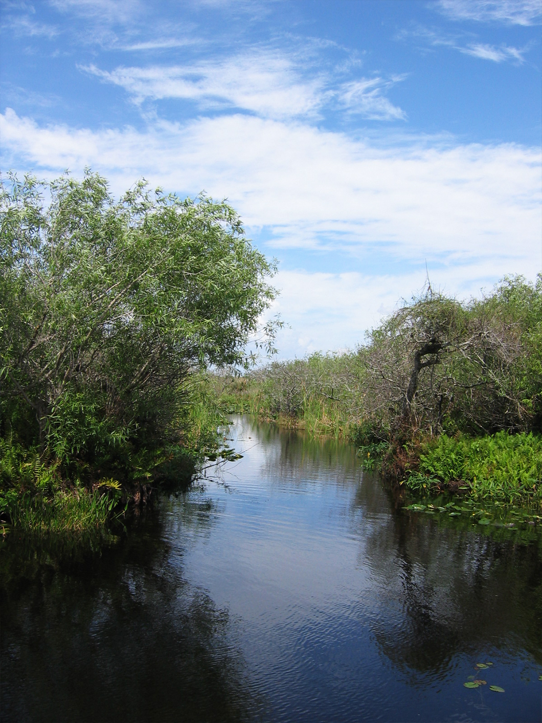 Road trip aux Etats Unis - Road trip USA - Everglades