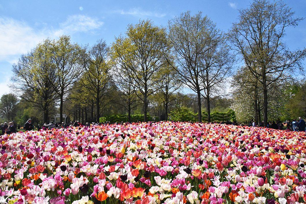 Parc de Keukenhof en Hollande