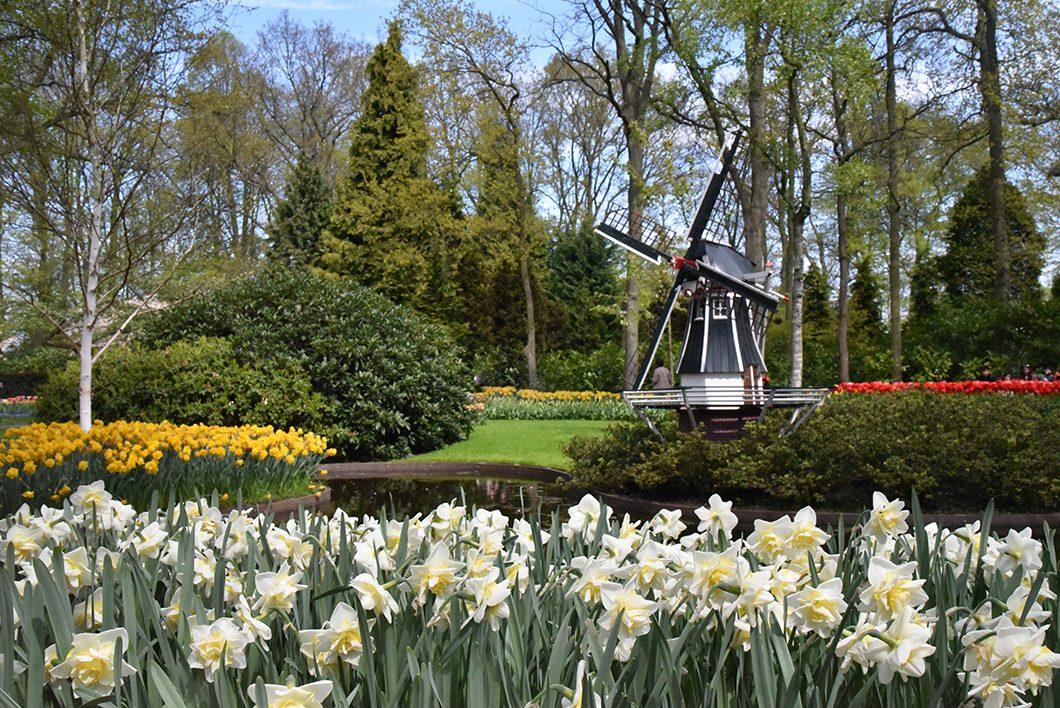 Découvrir les tulipes de hollande au parc de Keukenhof