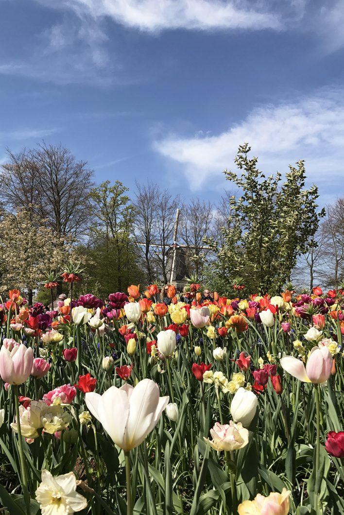 Keukenhof et son joli parc aux tulipes