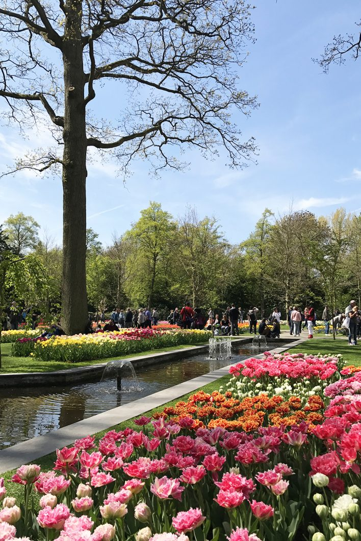 Visiter le parc aux tulipes de Keukenhof en Hollande