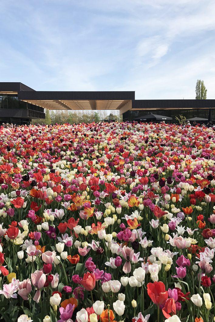 Visiter Keukenhof au printemps pour admirer les tulipes de Hollande