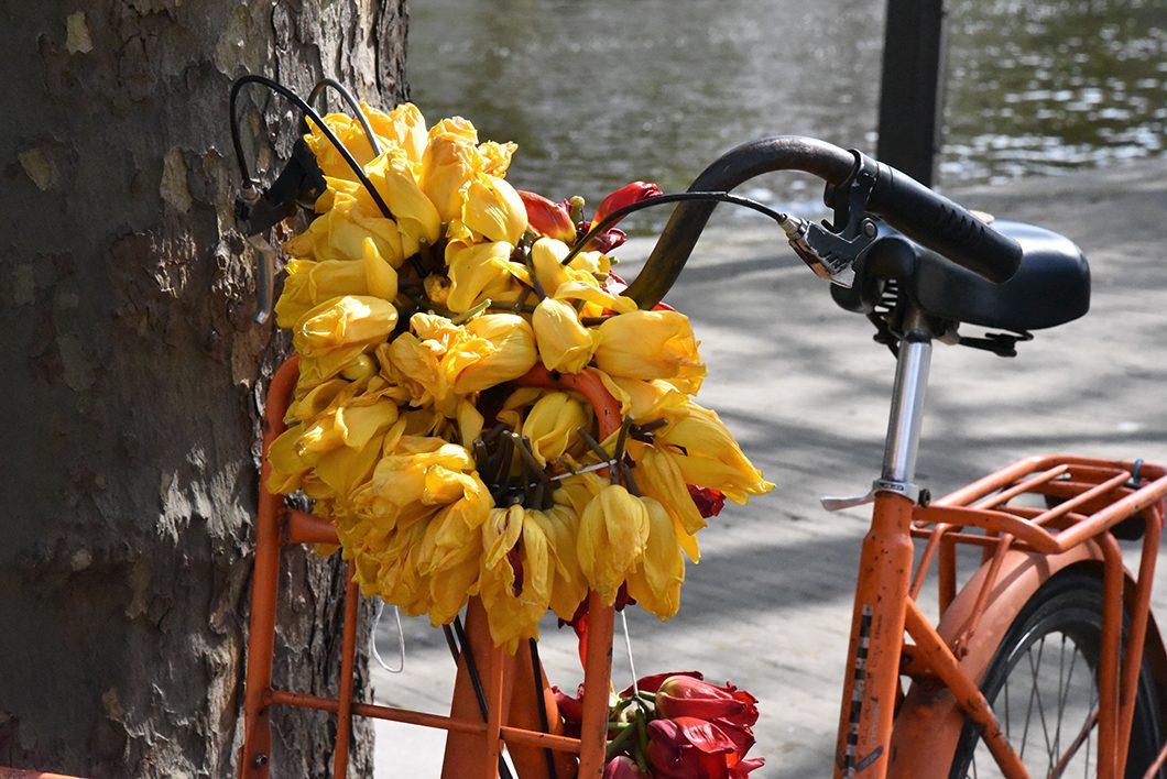 Visite à vélo, activité incontournable à Amsterdam