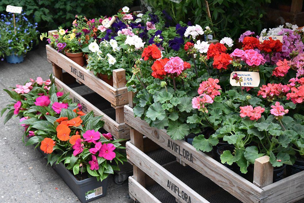 Acheter des fleurs à Amsterdam au marché