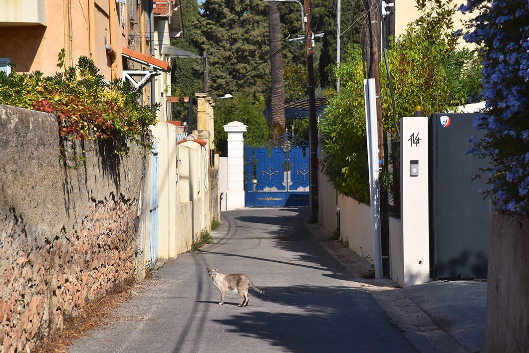 Un week end à Nice - Le parc du Mont Boron et le Fort du Mont Alban
