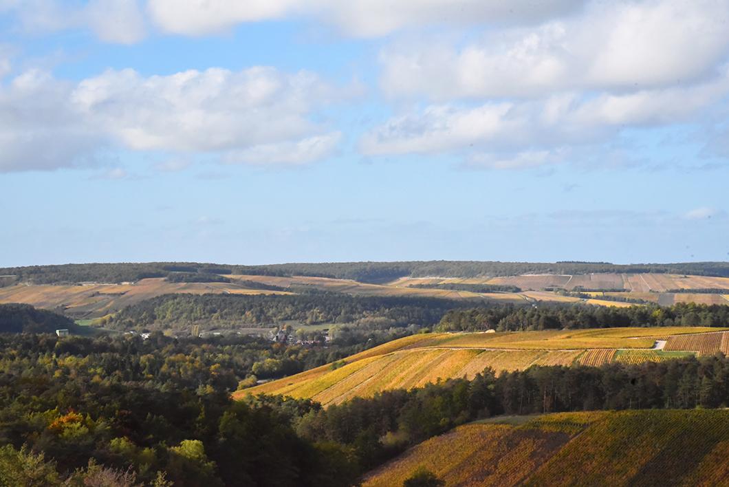 Vignes - Aube en Champagne