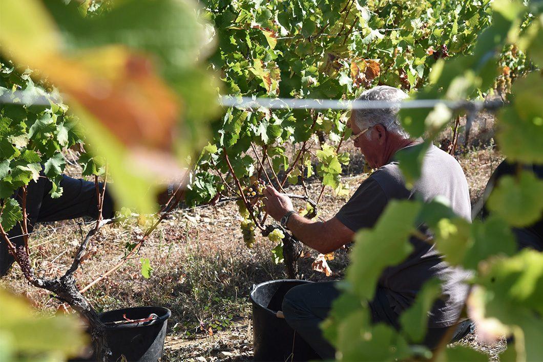 Visite du vignoble des Caves Vivaraises - week end oenotourisme en Ardèche