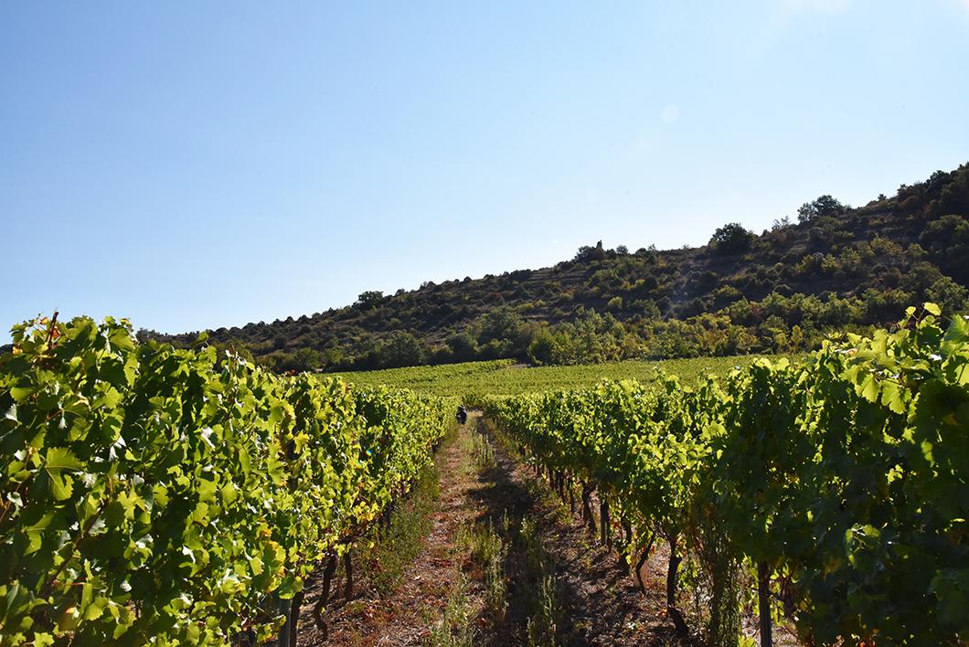 Caves Vivaraises - week end oenotourisme en Ardèche