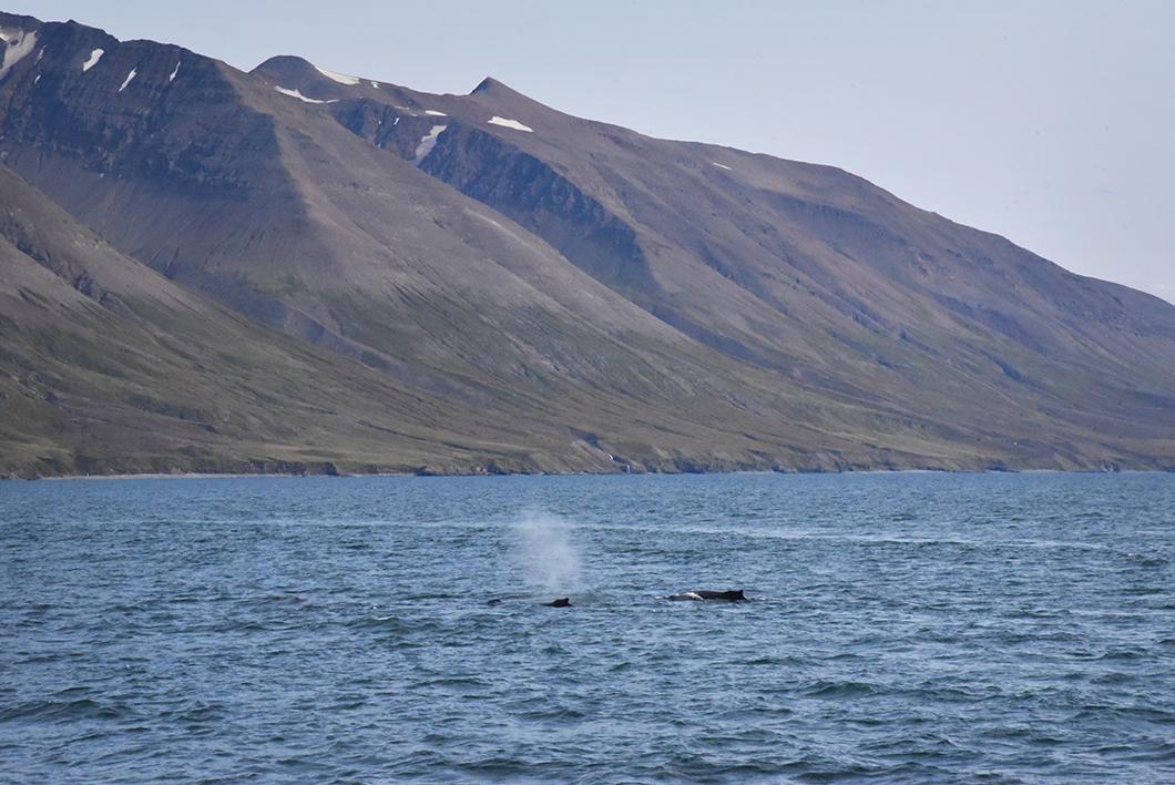 Voir les baleines en bateau
