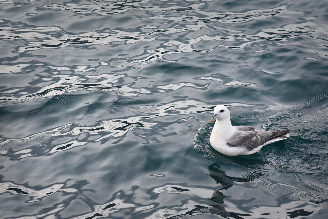 Découvrir la mer du Groenland en Islande