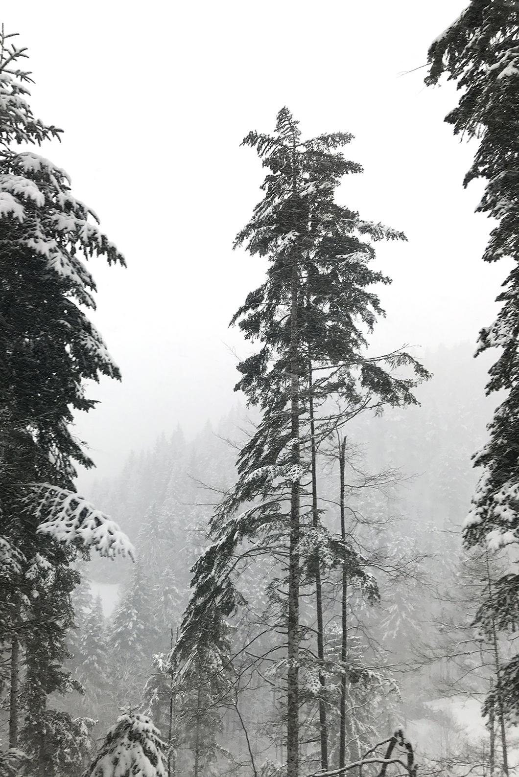 Saint Pierre de Chartreuse - Noël à la montagne