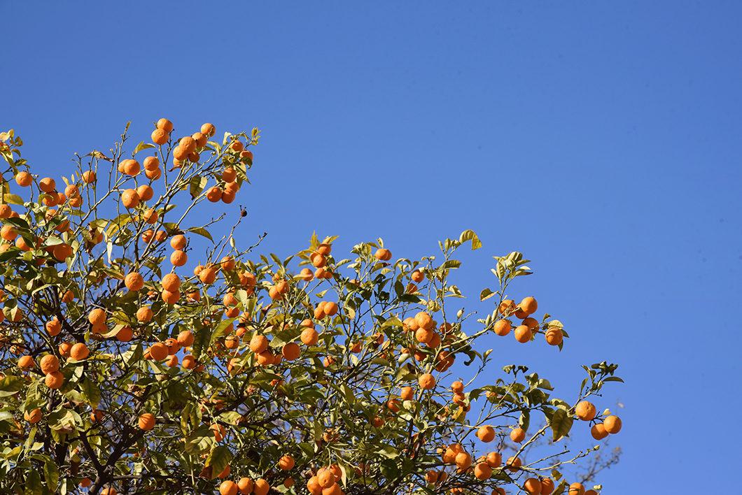 Visite du Jardin Murillo, visite incontournable à Séville