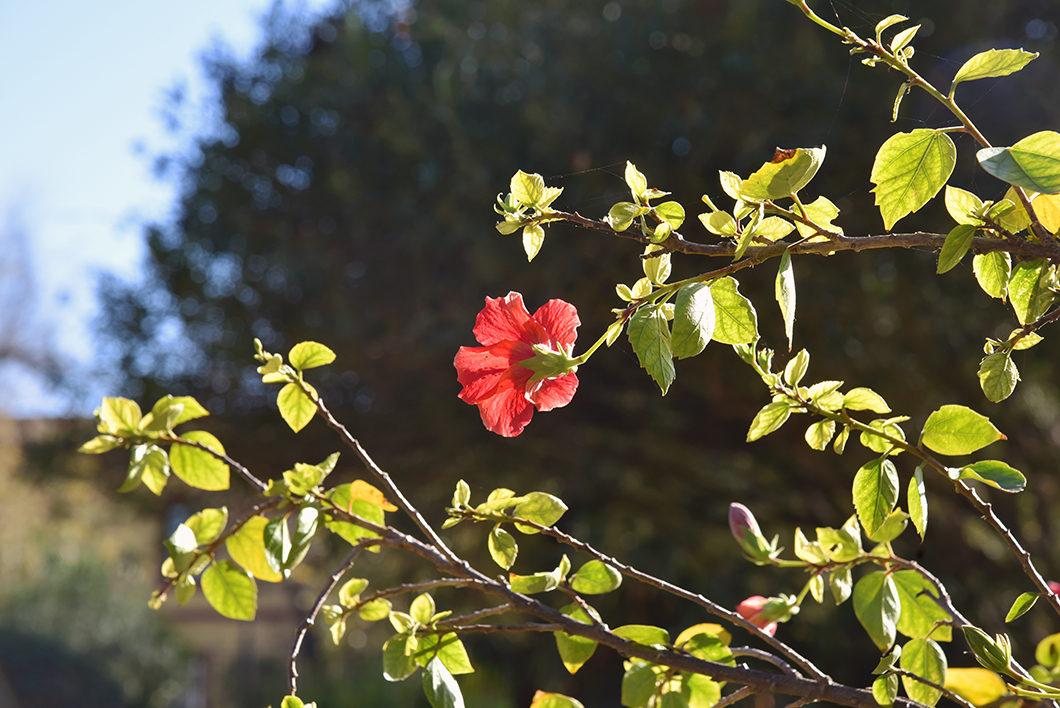 Visiter le Jardin Murillo, un week end à Séville