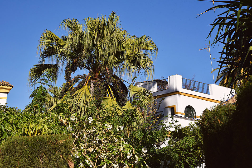 Visite du Jardin Murillo en Andalousie