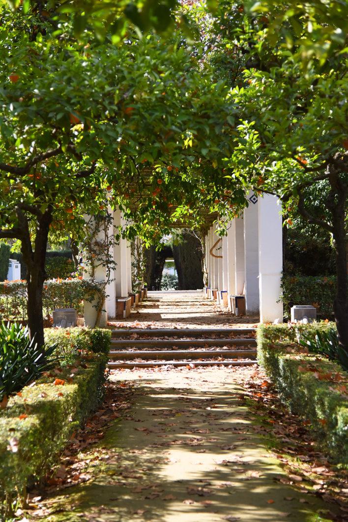 Visite du Parc Maria Luisa, visite incontournable à Séville