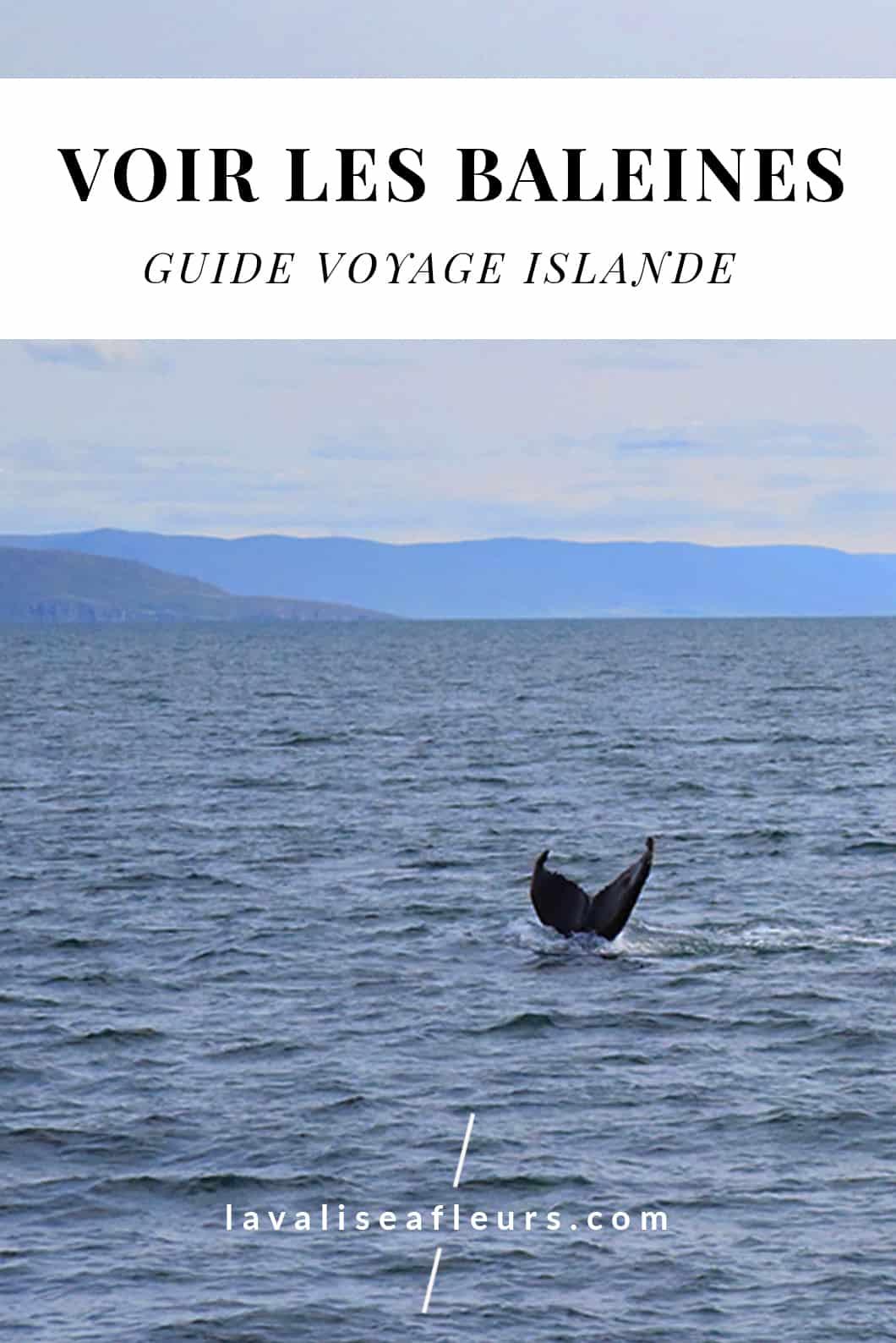 Où voir des baleines en Islande ? Notre guide voyage
