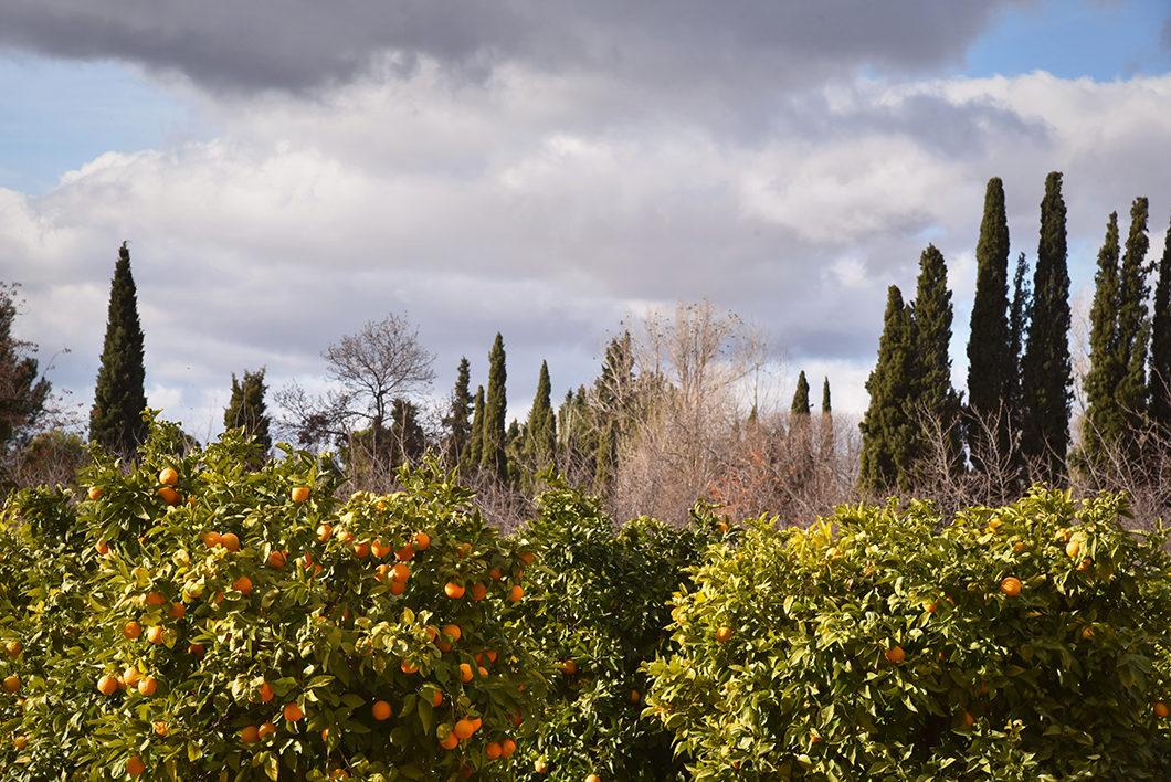 Visiter l'Alhambra à Grenade