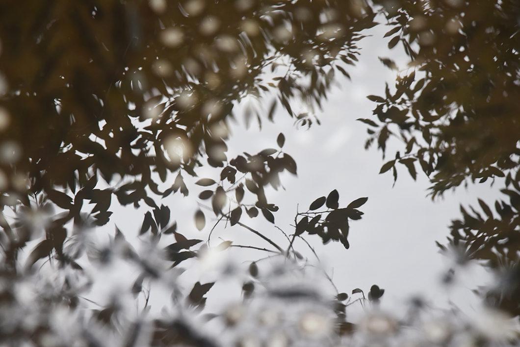 Se balader dans les jardins de l'Alhambra en hiver
