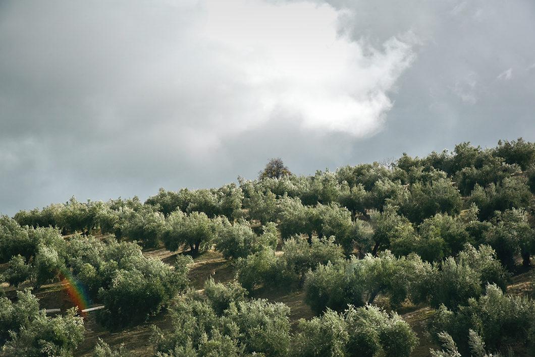 Les routes de l'Andalousie