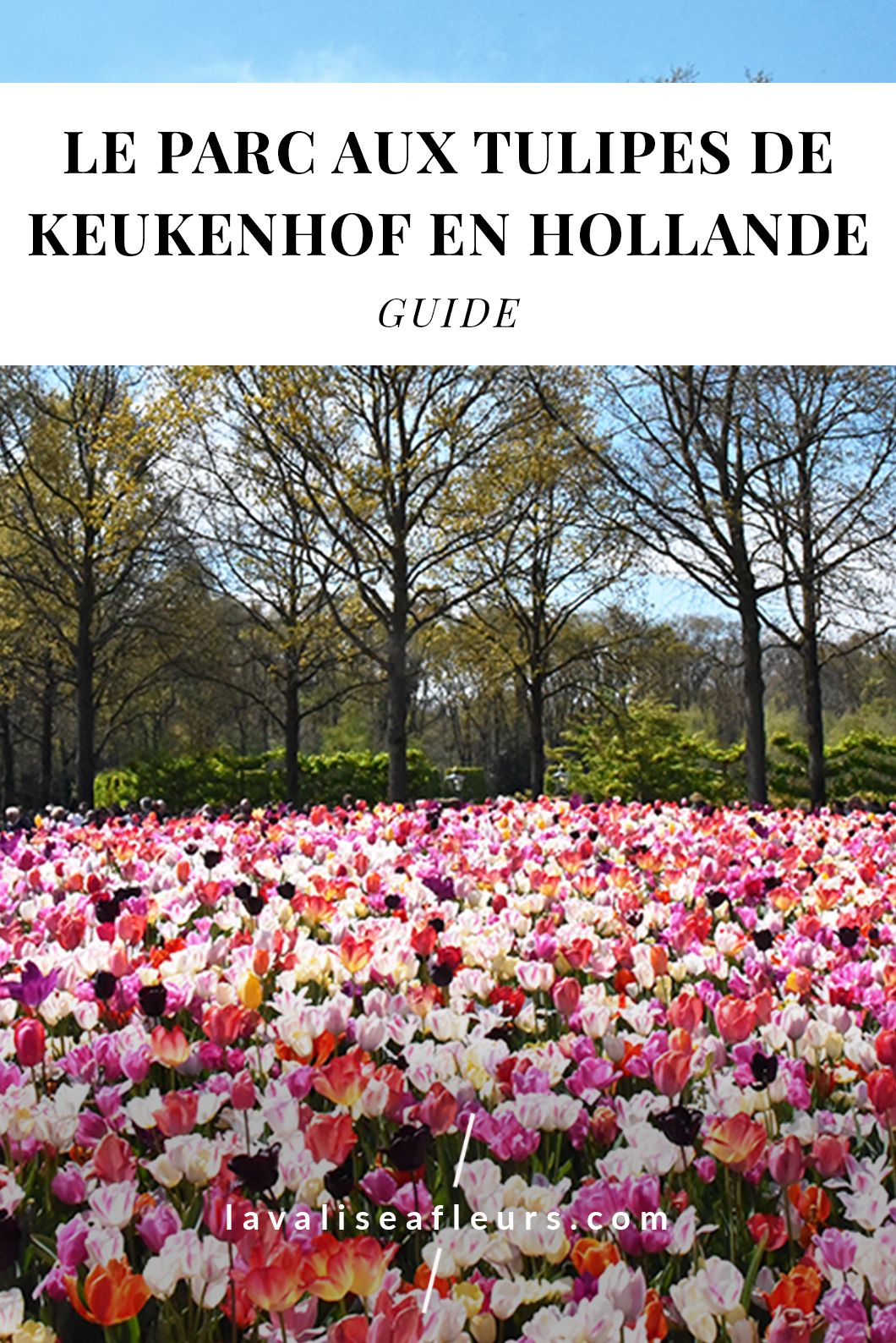 Le parc aux tulipes de Keukenhof en Hollande