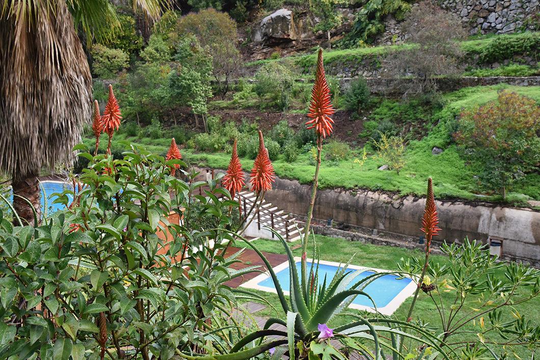 Les jolies fleurs de Monchique au Portugal