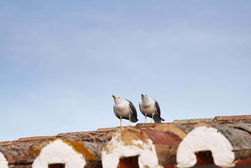 Visite à faire en Algarve