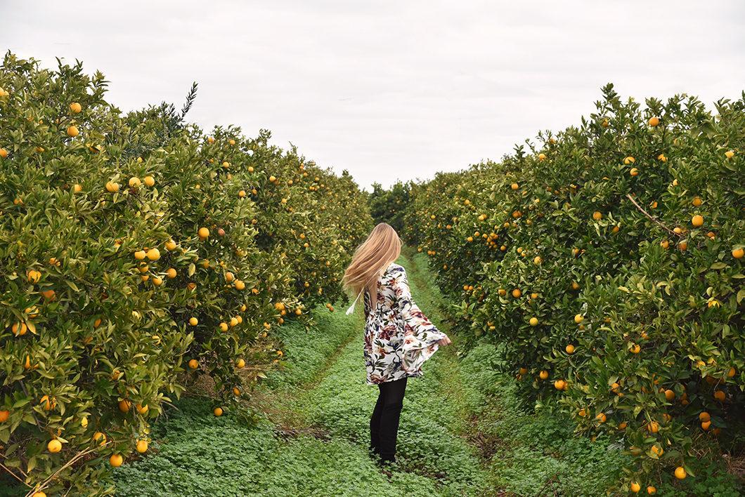 Se balader dans les champs d'orangers en Algarve
