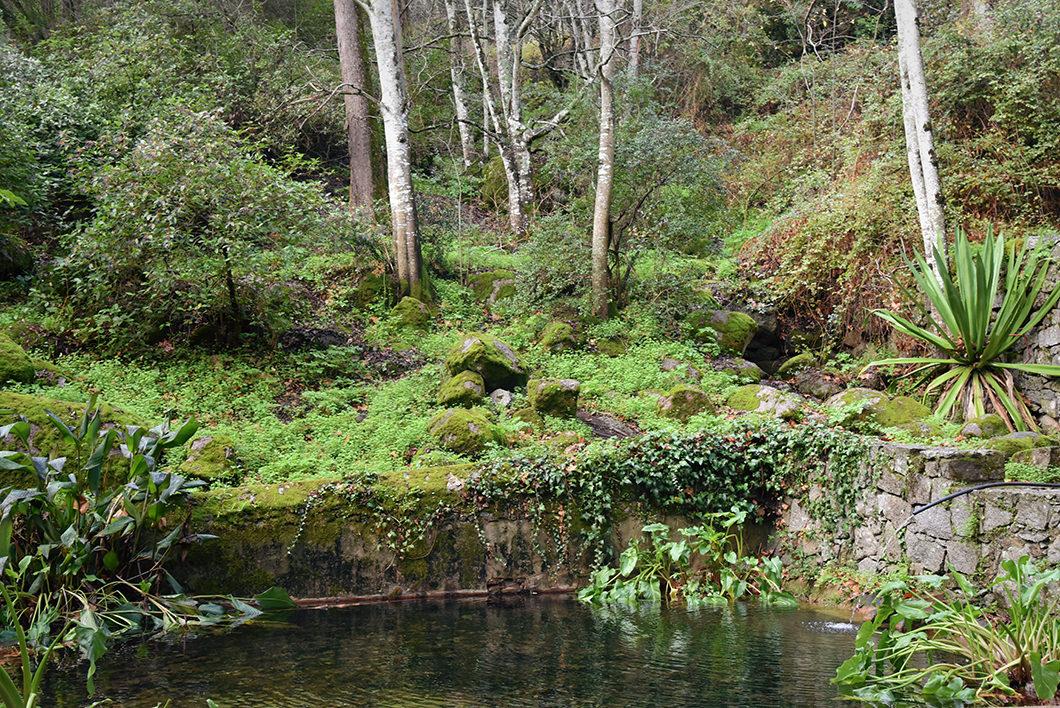 Forêt d'eucalyptus à Monchique au portugal