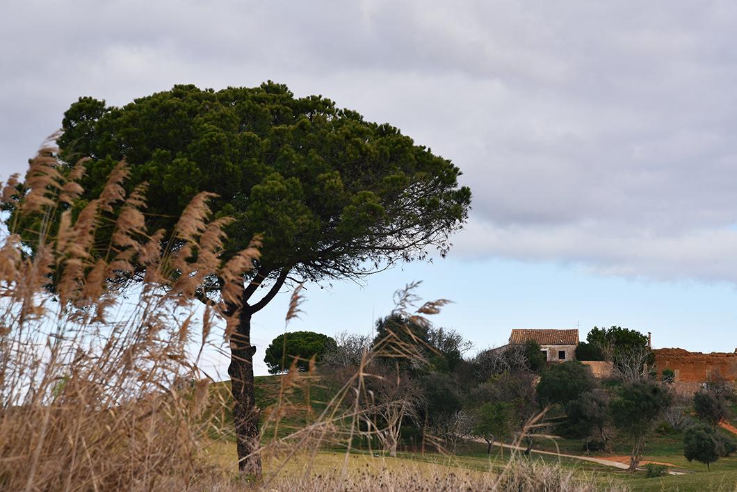 Visiter Lagos en Algarve au Portugal