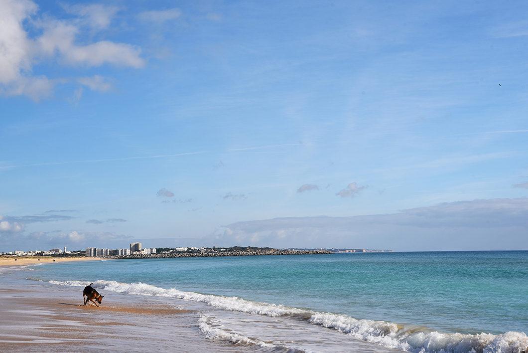Que faire en Algarve au Portugal ? Se baigner sur la plage de Lagos