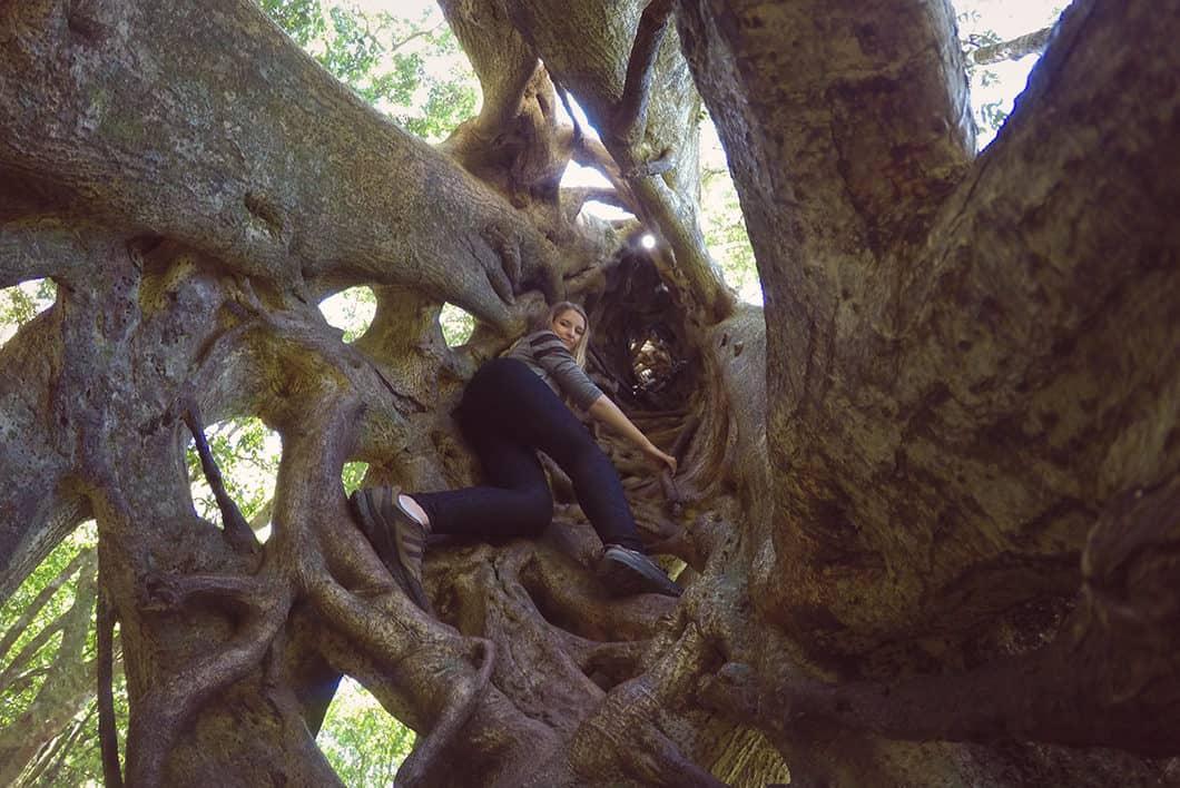 5 endroits à voir au Costa Rica, la forêt à Monteverde