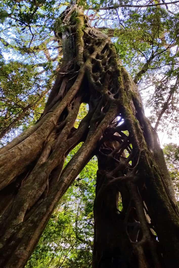 Que voir au Costa Rica ? La forêt à Monteverde