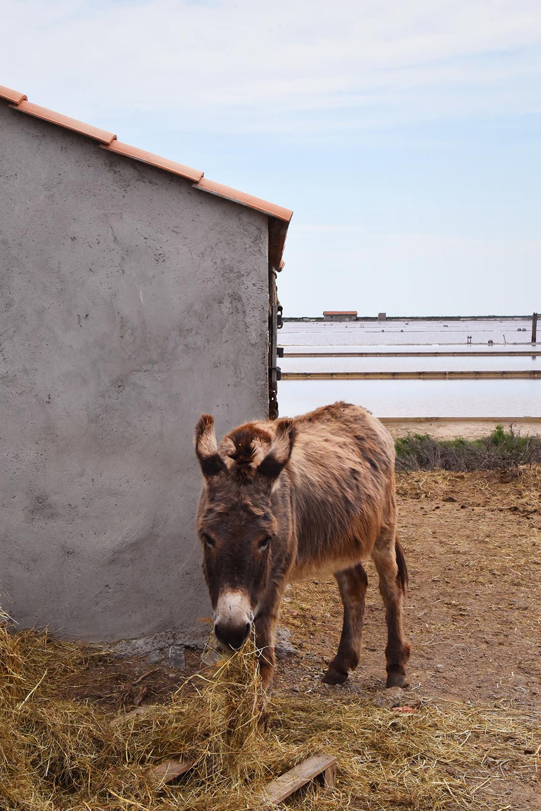 Que faire à Gruissan ? Visiter le Salin de l'île Saint-Martin