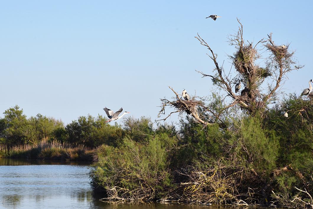 Que visiter en Camargue ? Parc ornithologique de Pont-de-Gau