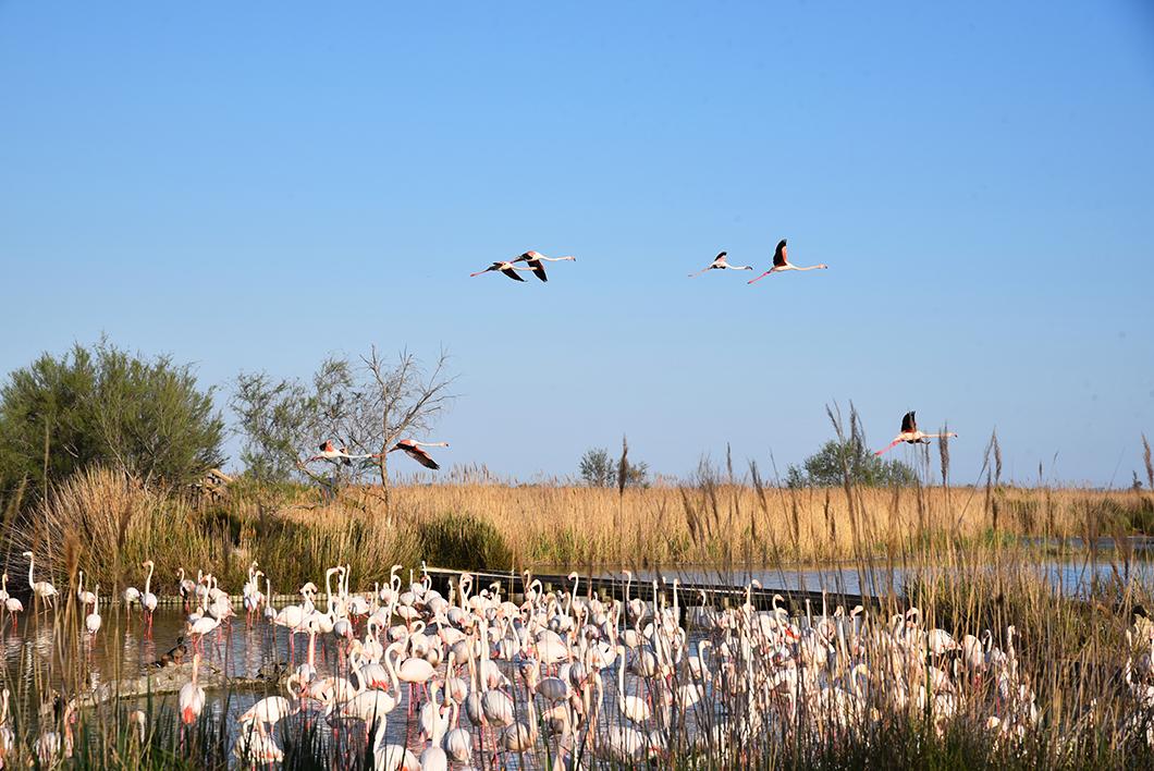 Parc ornithologique de Pont-de-Gau, visite incontournable en Camargue