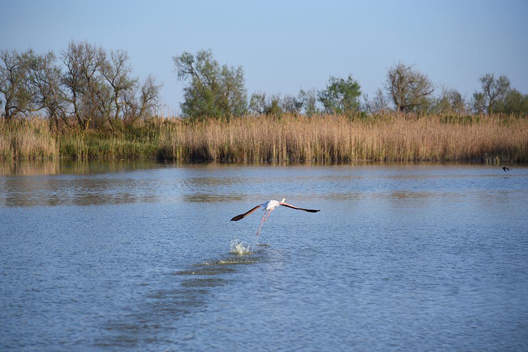 Que faire lors d'un week end en Camargue ? Parc ornithologique de Pont-de-Gau