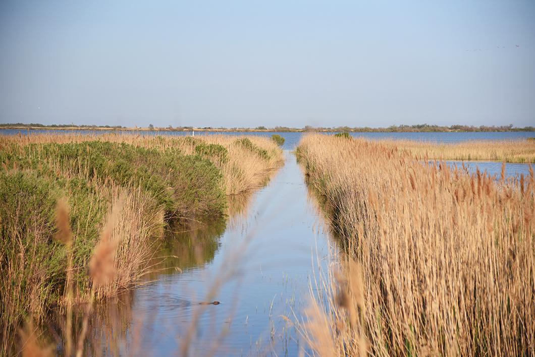 Parc ornithologique de Pont-de-Gau - Un week end en Camargue