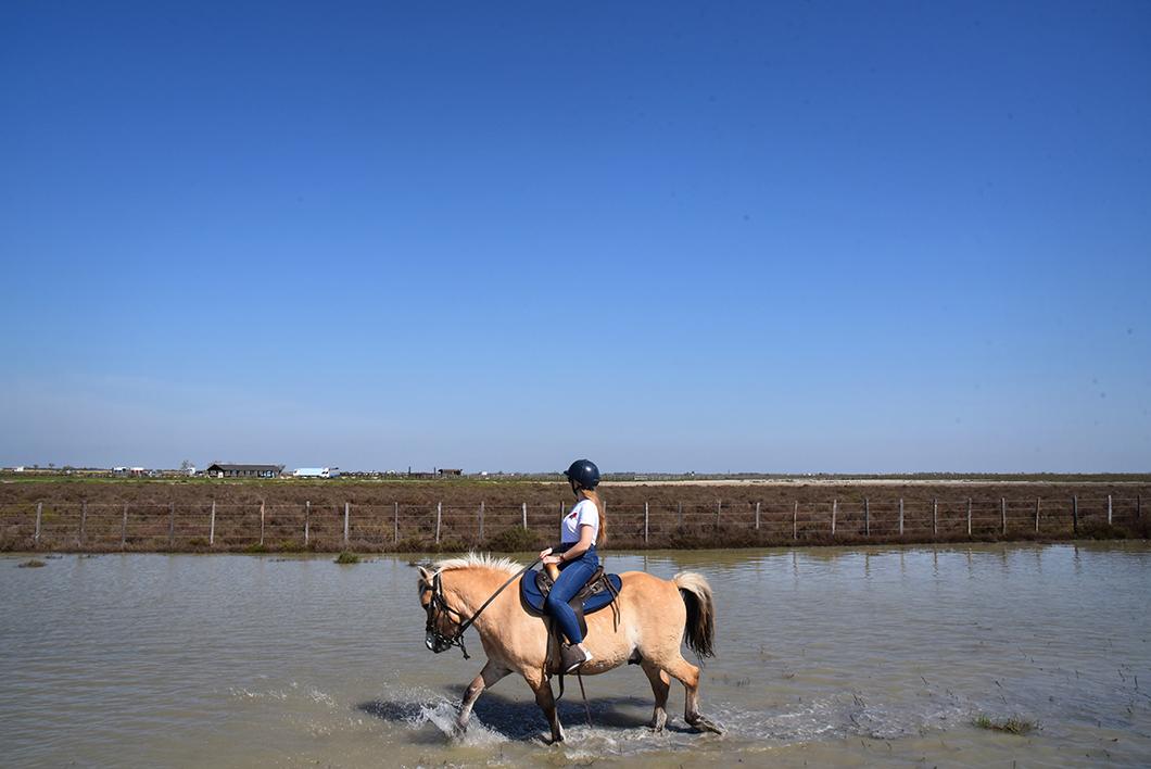Faire du cheval en Camargue au centre équestre des Arnelles