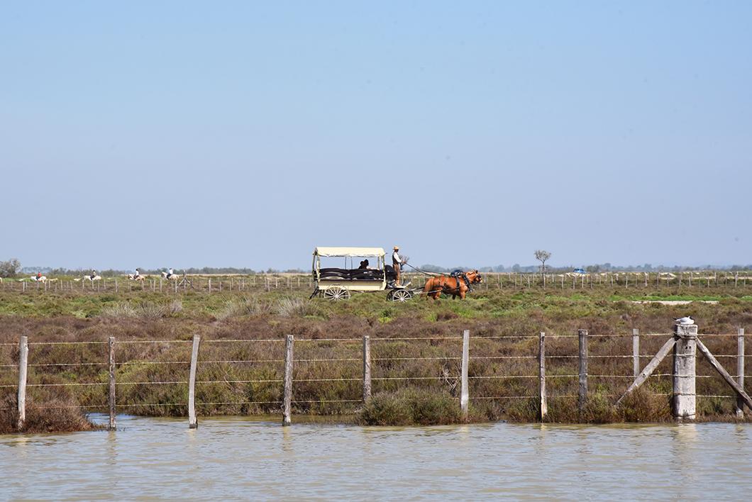 Balade à Cheval, activités incontournable en Camargue - centre équestre des Arnelles aux Saintes-Maries-de-la-Mer