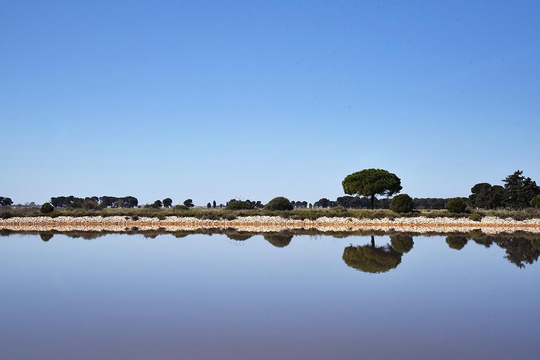Que faire lors d'un week end en Camargue ? Les Salins d'Aigues-Mortes