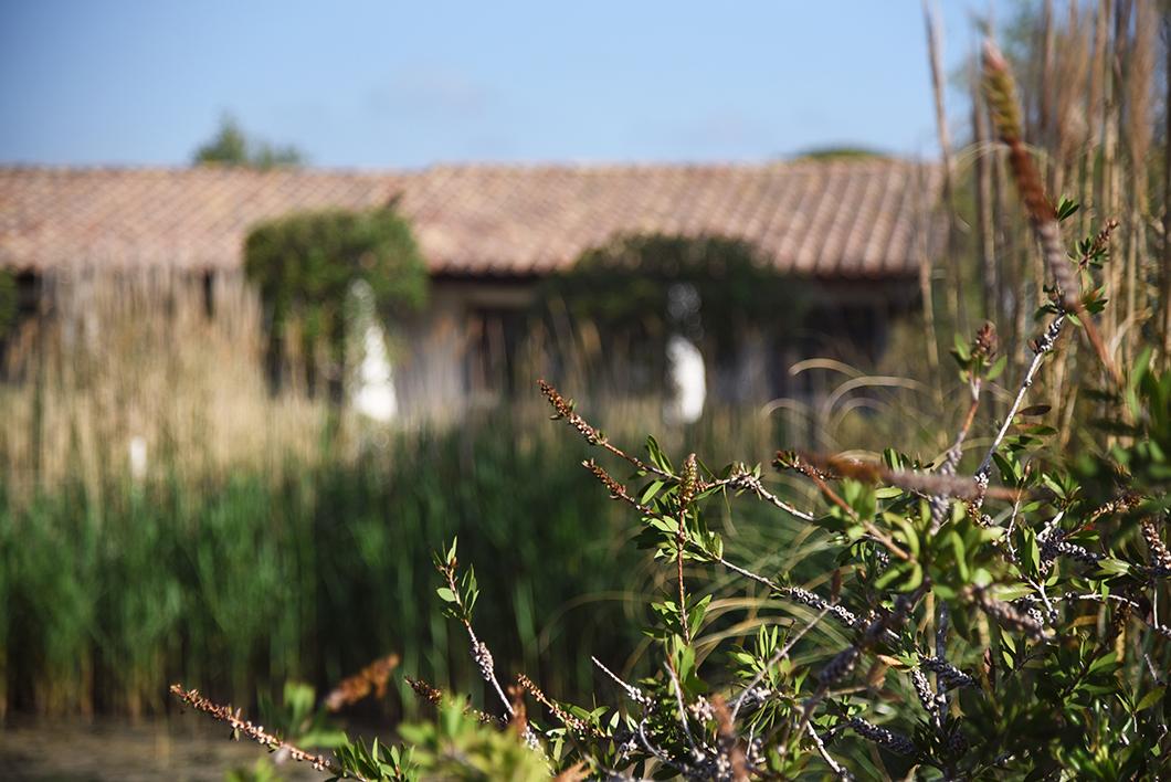 Où dormir aux Saintes-Maries-de-la-mer en Camargue ? Hôtel la Tramontane