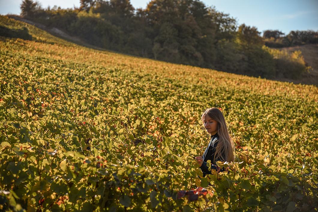 Vignobles de Sancerre - Road trip dans le Berry