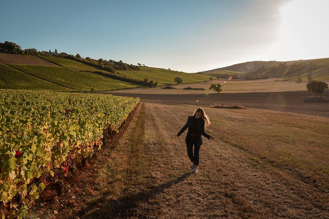 Que faire à Sancerre ? Découverte des vignes