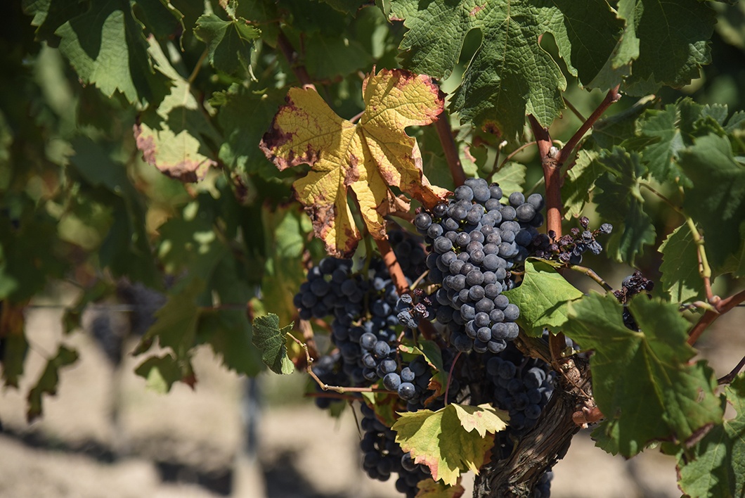 Survol du vignoble en ULM au Château Vénus - Activité insolite sur la Route des Vins de Bordeaux