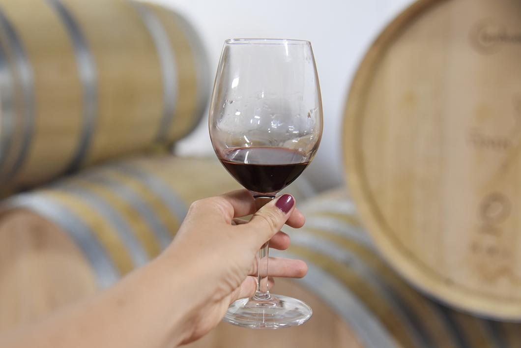Dégustation au Château Vénus - Route des Vins de Bordeaux