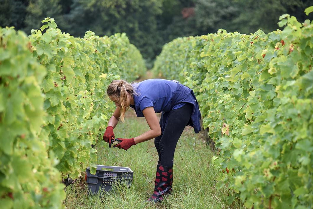 Balade à vélo dans les vignes bordelaises